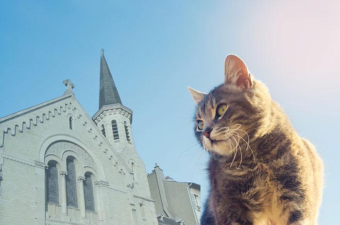 chat regardant le temple